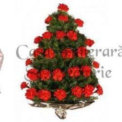 jerba-crizanteme-24-28-1